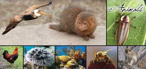 animals barbados pocket guide