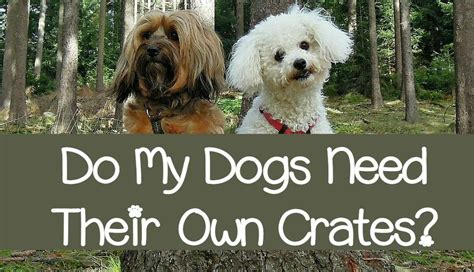 when do puppies need their do my dogs need their own crates dogvills