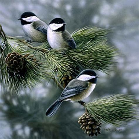 chickadee beauty pinterest