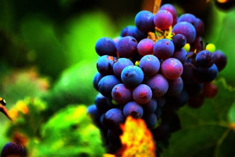 imagenes uvas moradas 10 poderes milagrosos de las uvas