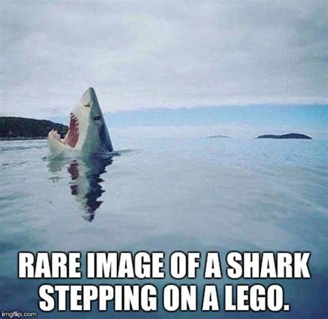 Funny Shark Memes - 33 funny pics these will get ya rollin funny pics