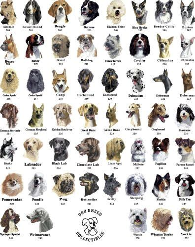types of dogs breeds chart dubai flag trainabledog gestation chart over