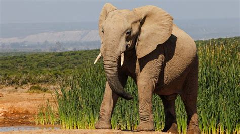 imagenes de animales no conocidos 191 c 243 mo se llama el sonido que emite el elefante