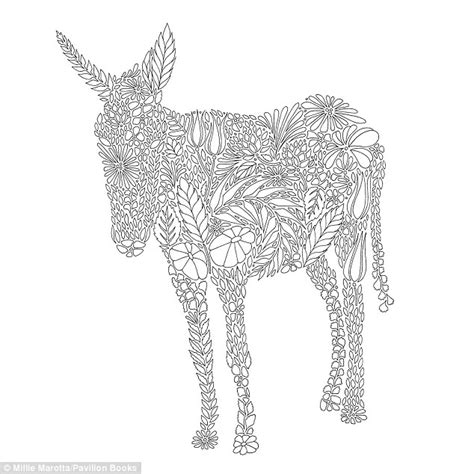 colouring books for adults animal kingdom millie marotta sells colouring books filled with animal