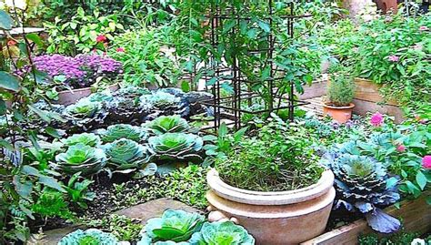 Northeast Gardening Small Vegetable Gardens That Grow Big Small Vegetable Garden Ideas