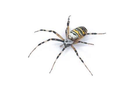 Garden Spider Pesticide Pest Index Archives Bed Bugs Termites Wildlife Pest