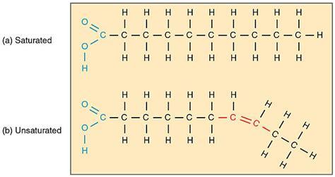 cadenas insaturadas y saturadas 193 cidos grasos saturados e insaturados