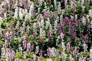 Pflanzen Für Den Schattigen Standort by Schattengarten Anlegen Beliebte Schattenpflanzen Und