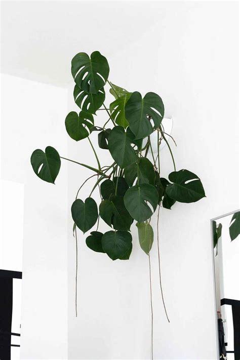 best indoor hanging plants low light best indoor low light hanging plants decoratingspecial com