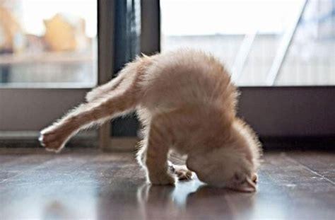 imagenes yoga animales estos 25 animales te ense 241 ar 225 n c 243 mo hacer yoga bast 237 simo
