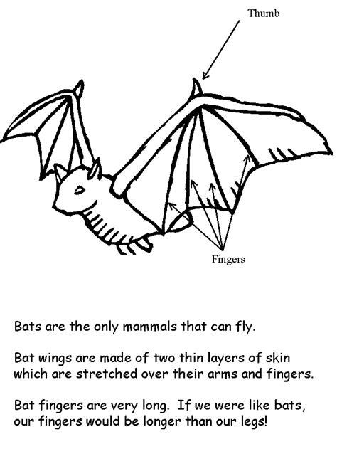 bat coloring pages preschool bat facts coloring book page preschool classroom