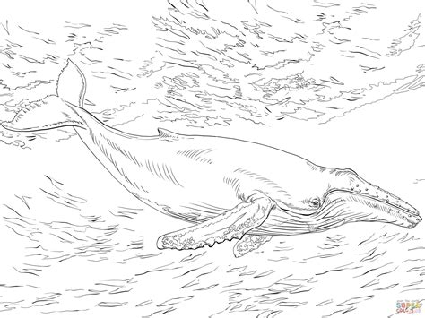 coloring page humpback whale diving humpback whale coloring page free printable coloring pages