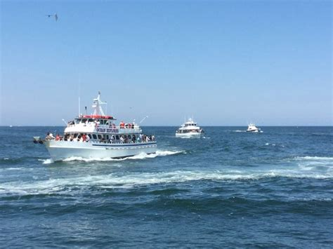 belmar fishing party boats 45 best belmar nj images on pinterest new jersey