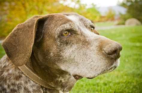 extend for dogs the abcs on how to extend your senior s lifespan
