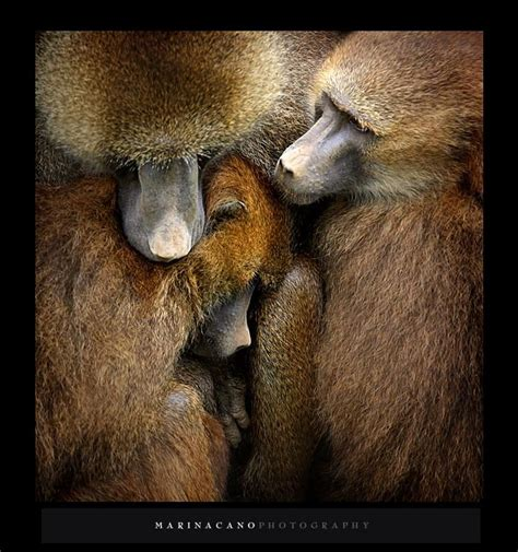 Maianan Animal Kingdom 52 best photos by marina cano images on