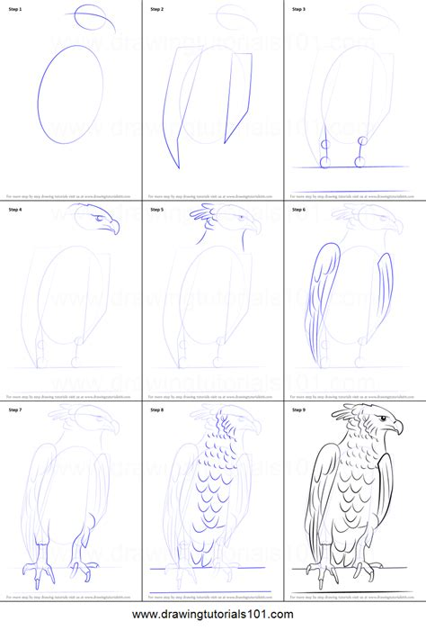 how to draw doodle step by step how to draw a harpy eagle printable step by step drawing