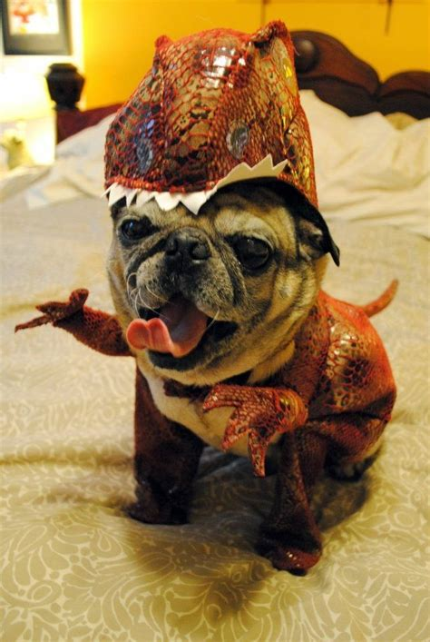 pug dinosaur costume 1000 images about you so pugly on