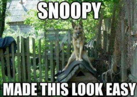Funny German Memes - german shepherd funny dog quotes animals pinterest