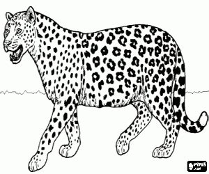 Felines coloring pages printable games #2