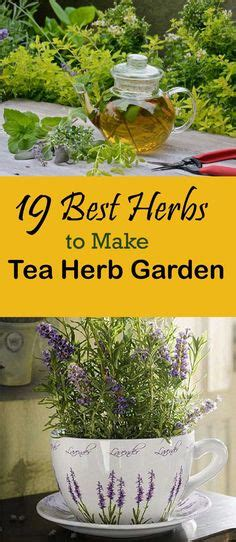 1000 images about growing herbs in the garden on 1000 images about garden and yard ideas on pinterest
