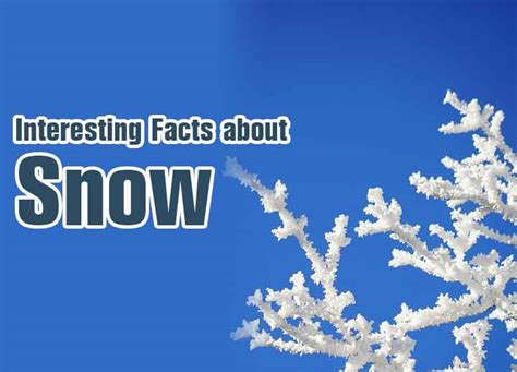 facts about interesting facts about snow everything mountains