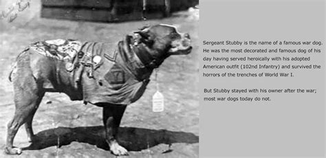 Sergeant Stubby Owner Projects Fair Canine Foundation