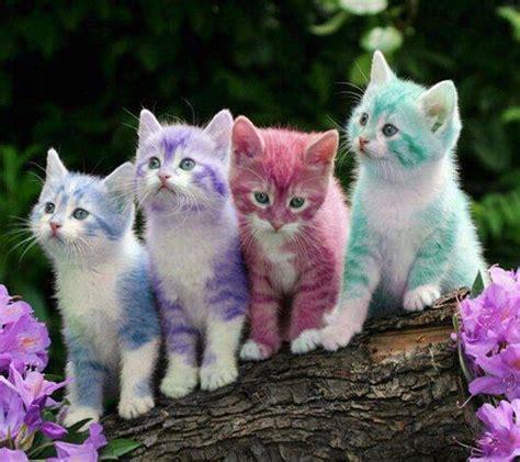 wallpaper chat lucu cute kittens cats picture