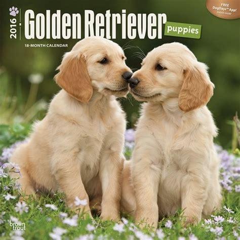 golden retriever pris kalender 2018 valp golden retriever europosters se