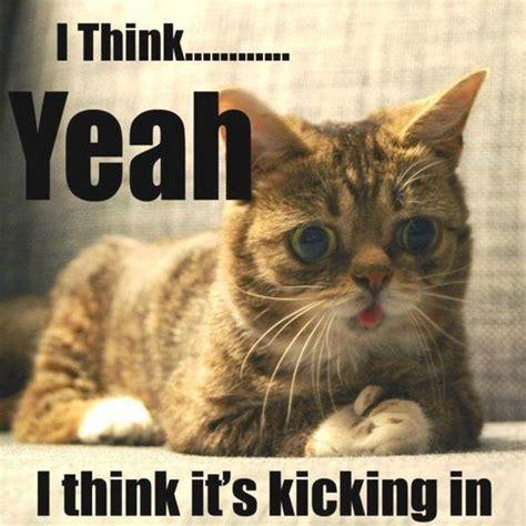 Wet Cat Meme - funny cat memes wet cat wednesday cat memes