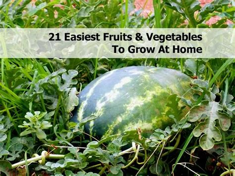 21 Easiest Fruits Vegetables To Grow At Home What Are The Easiest Vegetables To Grow In A Garden