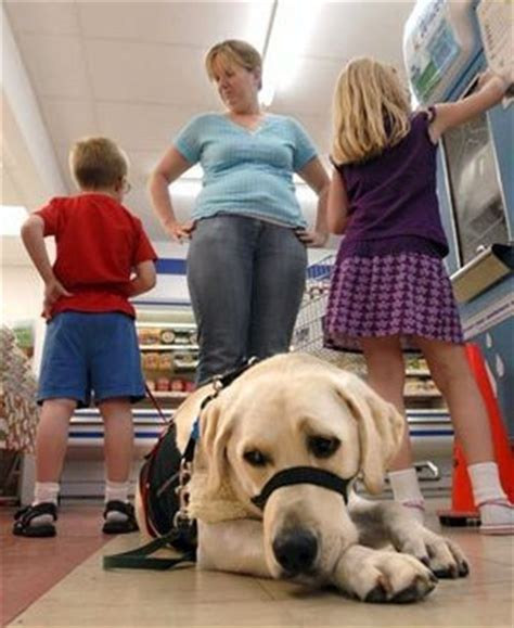 schools for service dogs schools fight families autism service dogs the seattle times