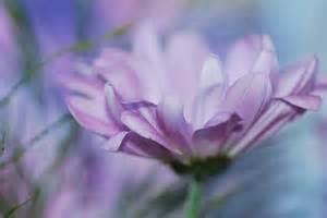 light purple flowers light purple flower jpg