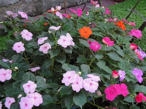 imagenes flores de jardin flores de mi jard 237 n fotos propias taringa