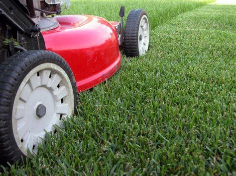 expert grass cutting and landscape maintenance services