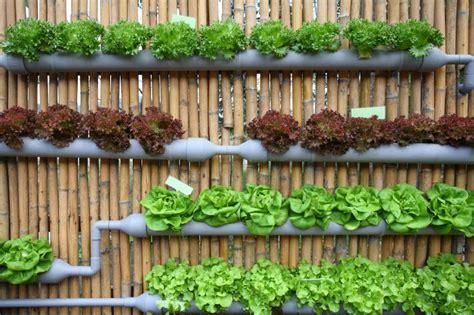 un jardin potager en permaculture culture bio