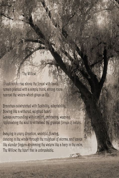 willow poem poetry photography sepia willow tree weeping gedichten fotografie