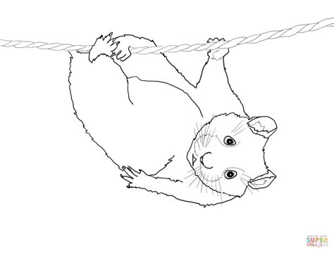 coloring page of hamster free coloring pages of a cute hamster
