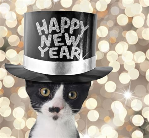 new year s resolutions that my cat catster