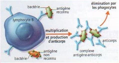 seq 6 r 233 actions immunitaires i