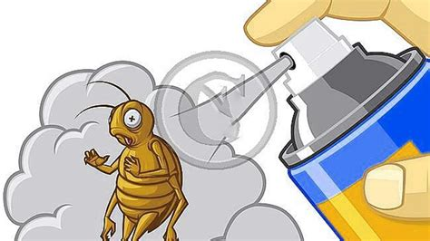 getting rid of bed bugs diy articles get advice and tips hometriangle