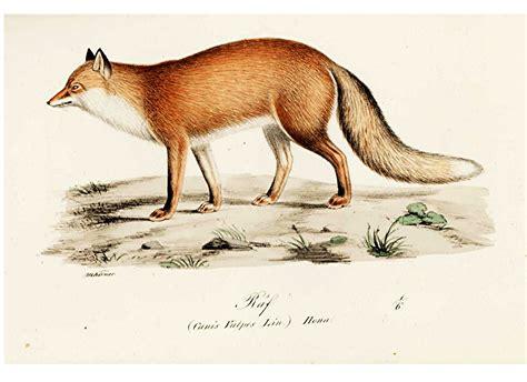 vintage printable animal animal illuminerade figurer dog fox 2 vintage