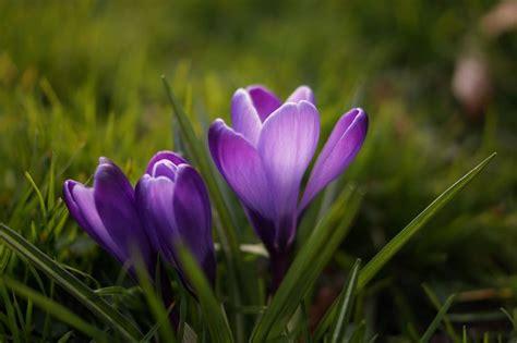 fiori di loro tipi di fiori fiori di piante caratteristiche dei tipi