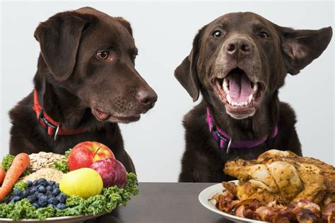 dog not eating foods dogs should not eat to ensure a long healthy life