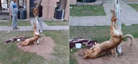 puppy beaten a stray in chandigarh beaten thrown out of city where s the