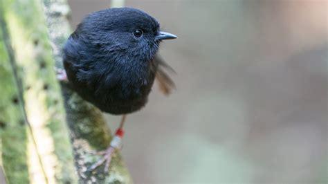 birds that start with n birds of prey