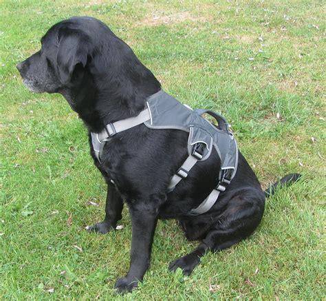 zwemvest hond k9 ruffwear web master harness hydrodogs