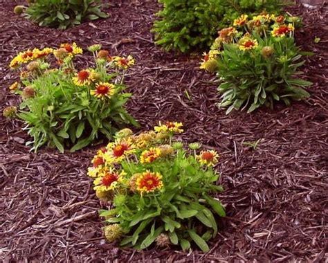 pacciamatura giardino pacciamatura giardinaggio
