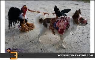 Pics photos homemade zombie dog costume jpg