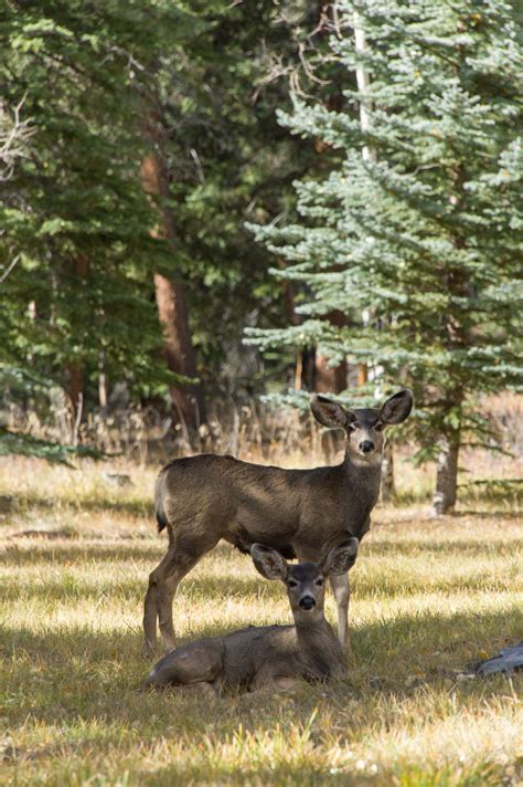 forum targets proteins  chronic wasting  human disease source colorado state university