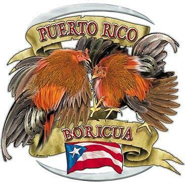 peleas de gallos en puerto rico pelea de gallo hello criollo style pinterest